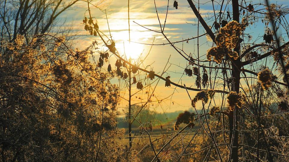 Sunrise, Winter, Nature, Scrub, Landscape, Cold, Sky
