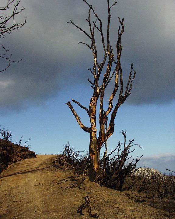 Tree, Burned, Landscape, Sky, Weather, Fire, Greece