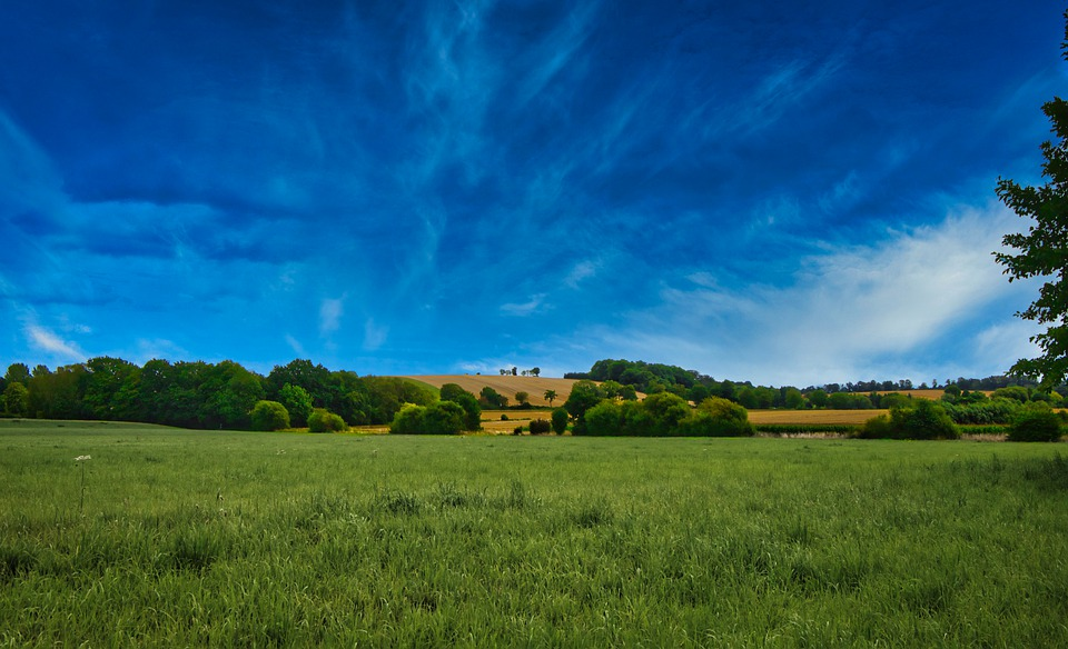 Field, Summer, Meadow, Landscape, Grass, Rural, Sky