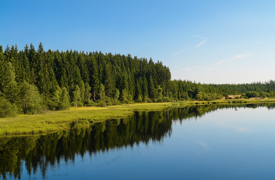 Sky, Forest, Lake, Idyll, Mood, Landscape, Mirroring
