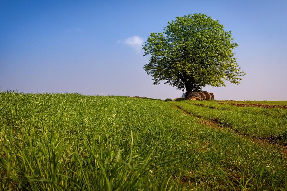 Tree, Landscape, Sky, Meadow, Nature