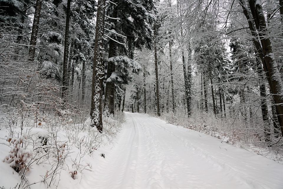 Snow, Winter, Wood, Tree, Cold, Landscape, Season