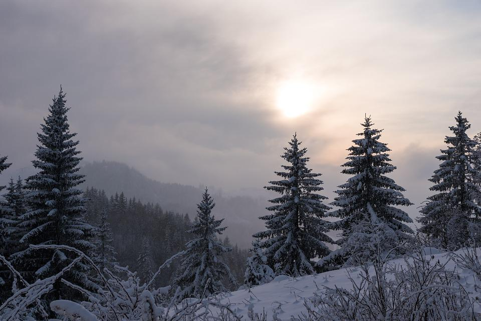Snow, Winter, Wood, Nature, Mountain, Landscape, Frost