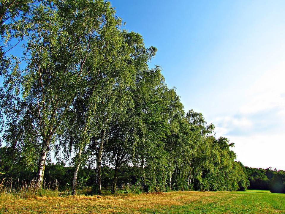 Tree, Nature, Government, Spring, Foliage, Landscape