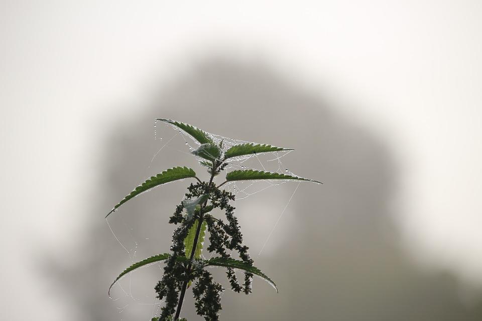 Autumn, Fog, Stinging Nettle, Nettle, Nature, Landscape