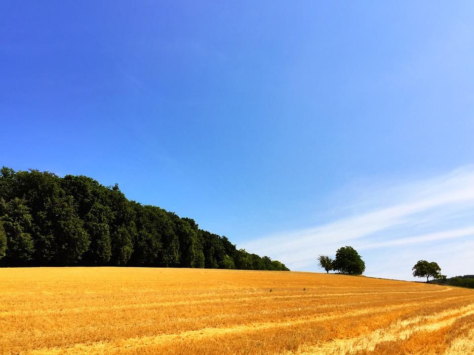 Field, Straw, Harvest, Landscape, Sumer, Dry, Wheat