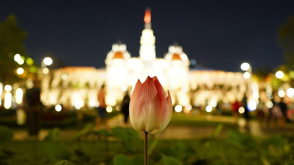 Landscape, City, Lotus, Flower, Street Photography