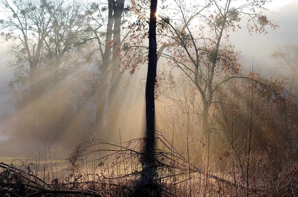 Sunbeam, Fog, Backlighting, Nature, Trees, Landscape