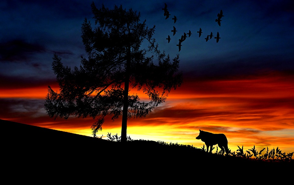 Wolf, Animal, Sunset, Landscape, Nature, Afterglow, Sky