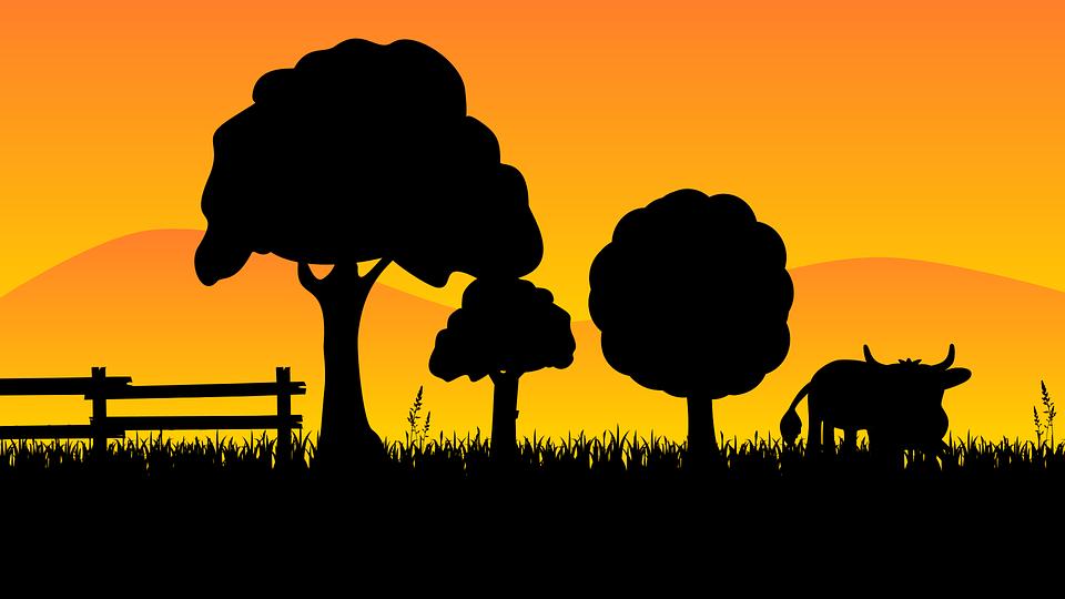 Country, Cow, Grass, Landscape, Sun, Sunset