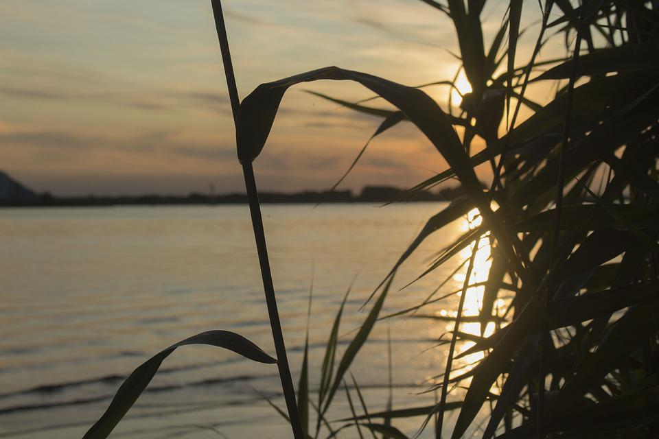 Plant, Shadow, Sunset, Light, Nature, Landscape, Water