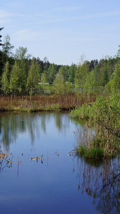 Finnish, Landscape, Swamp, River, Wetland, Reeds