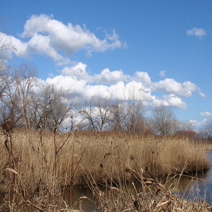 Wetlands, Tall Grass, Water, Landscape, Wilderness