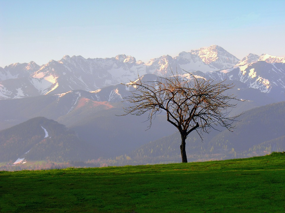 Tatry, Tree, Landscape, Poland, Mountains, Top, Scenery