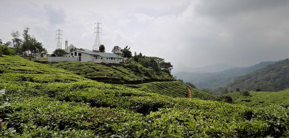 Munnar, Kerala, In, India, Landscape, Mountain, Tea