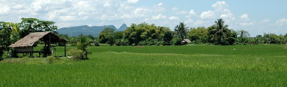 Landscape, Thailand, Rice
