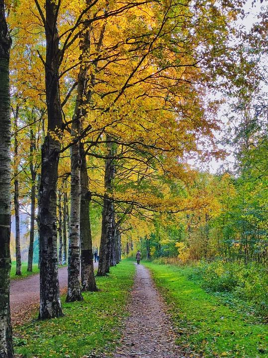 Park, Trail, Forest, Autumn, Nature, Landscape, Woods