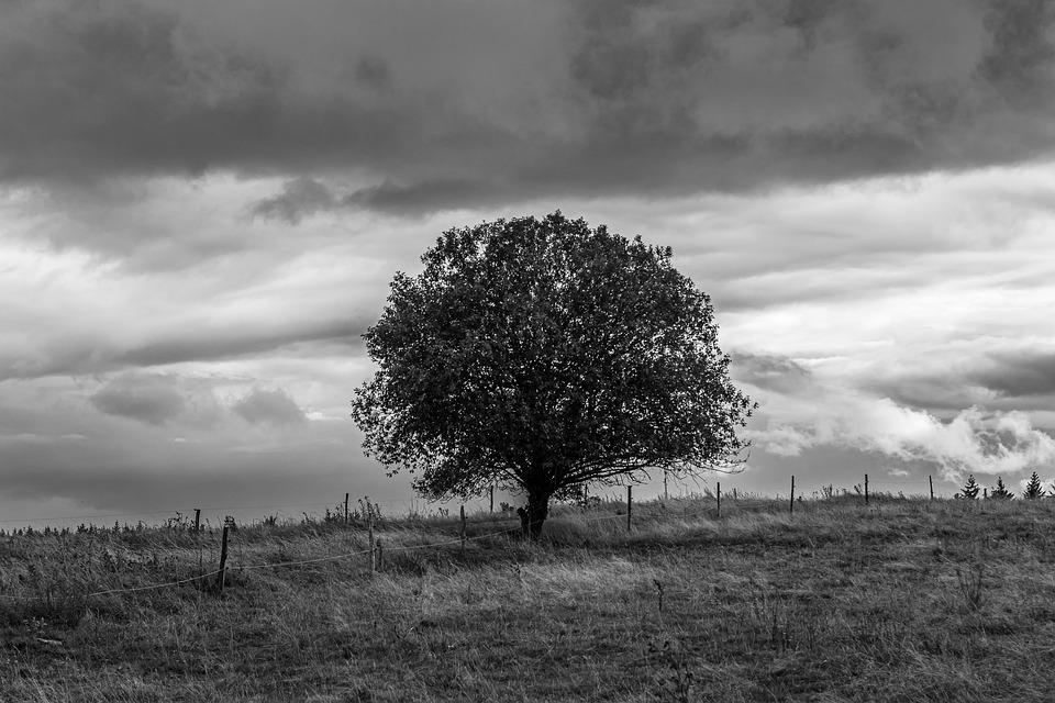 Tree, Sky, Grass, Field, Nature, Landscape, Cloud