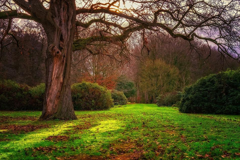 Sun, Backlighting, Forest, Nature, Landscape, Tree