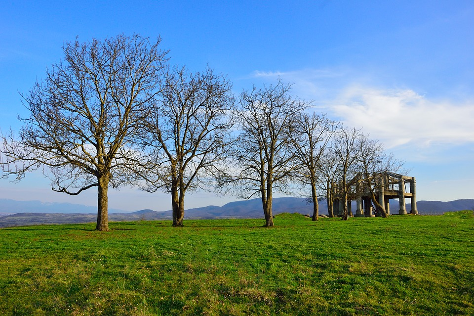 Panoramic, Nature, Landscape, Tree, Grass