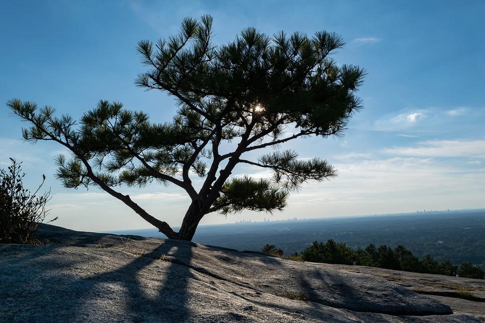 Tree, Sunlight, Branches, Light, Landscape