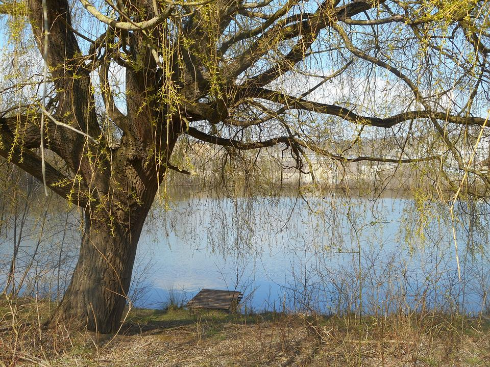 Landscape, River, More, Water, Tree, Large, Country