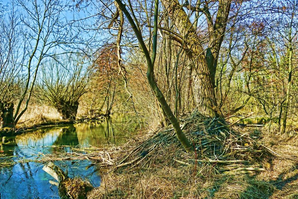 Nature, River, Beaver Castle, Wood, Landscape, Tree