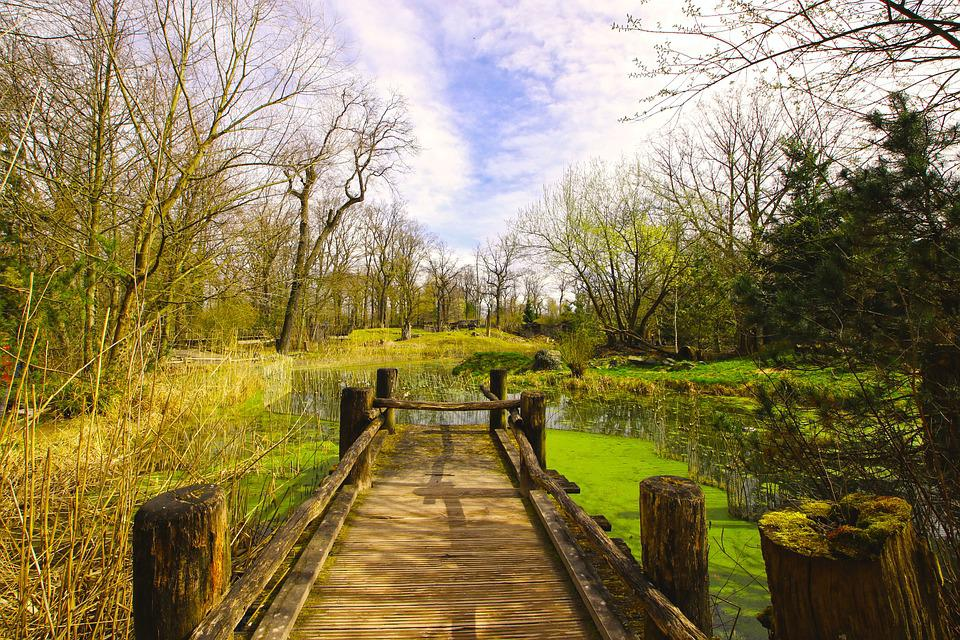 Wood, Tree, Nature, Landscape
