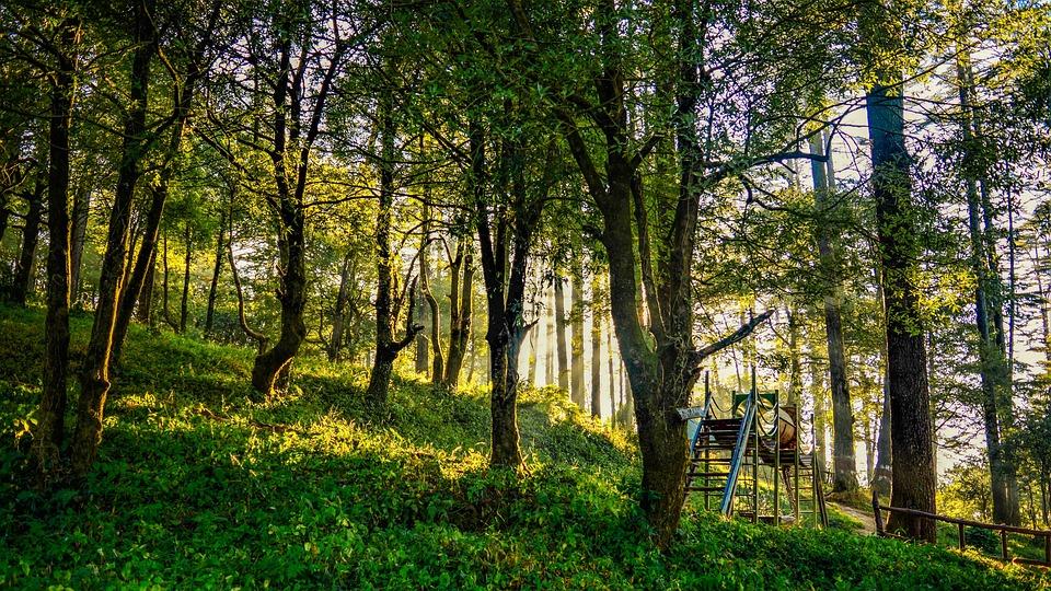 Nature, Tree, Landscape, Wood, Park, Season, Sun