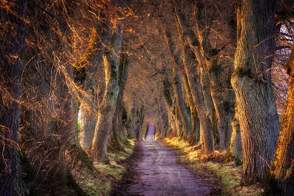 Nature, Trees, Landscape, Avenue, Abendstimmung, Mood