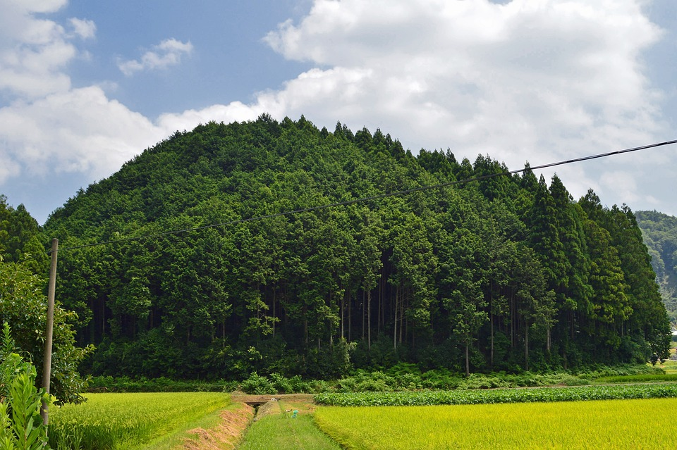 Japan, Forest, Trees, Landscape, Nature, Outside