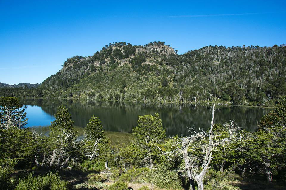 Landscape, Pine, Nature, Trees, Scenic, Forests