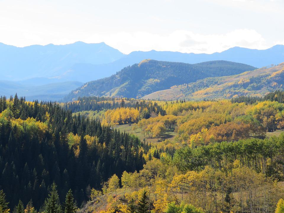 Forest, Mountains, Autumn, Nature, Landscape, Trees