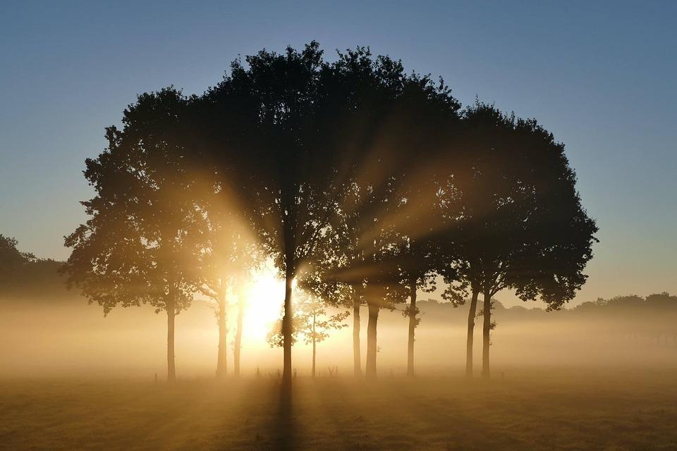 Trees, Sunrise, Landscape, Morning, Sun, Silhouette
