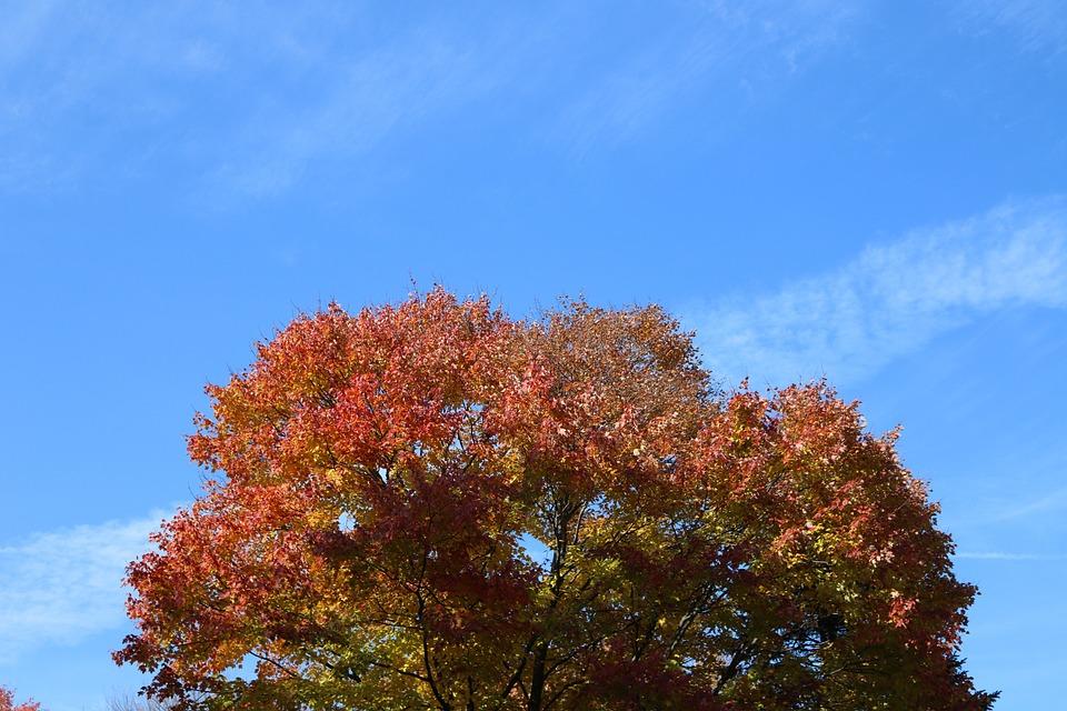 Autumn, Nature, Leaves, Tree, Landscape, Trees, Walk