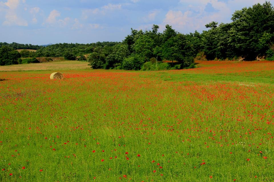 Poppy, Fields, Landscape, Countryside, Spring, Tuscany