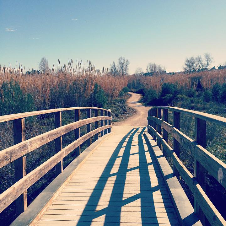 Bridge, Vegetation, Nature, Landscape, River, Channel