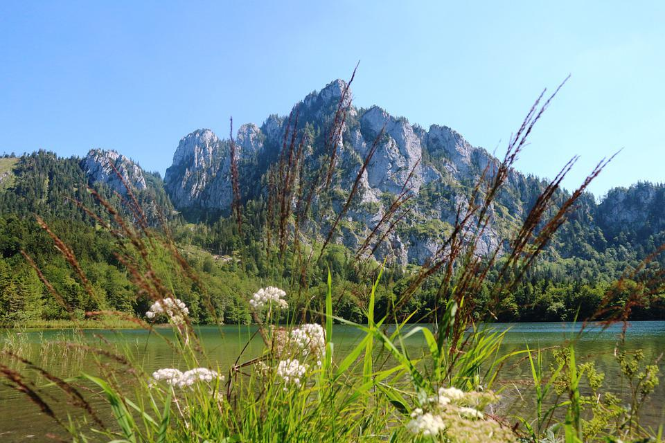 Laudachsee, Plumes, Vegetation, Mountains, Landscape