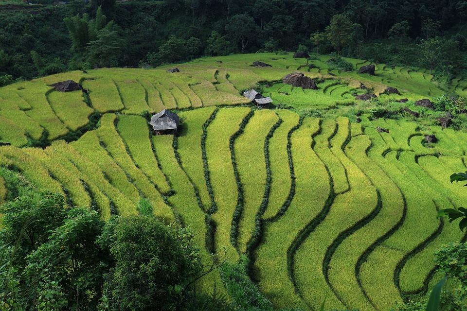 Landscape, Terraced Fields, Vietnam, Vietnam Rice