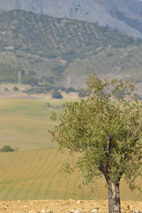 Tree, Spain, Landscape, Nature, Mediterranean, View