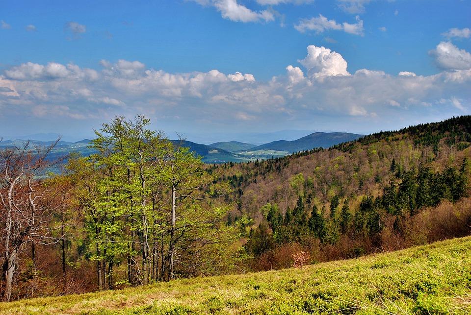 Landscape, Beskids, Mountains, View, Tree, Tops