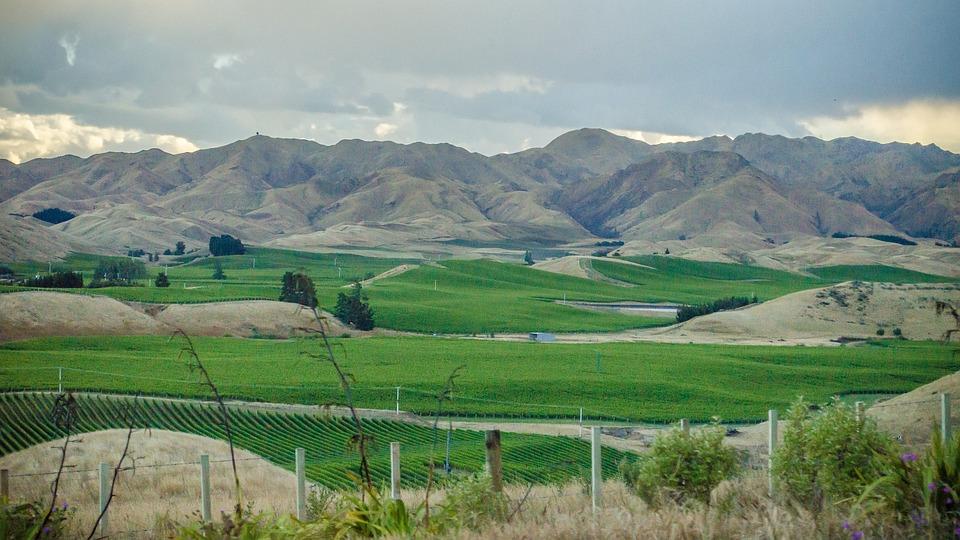 Mountain, Fields, Vineyards, Field, Landscape