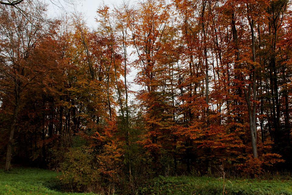 Autumn Leaves, Trees, Autumn, Vote, Landscape, Colorful