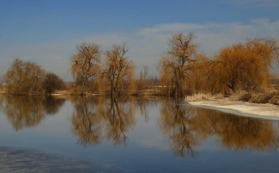 Willow, Reflection, Water, Landscape, Yellow