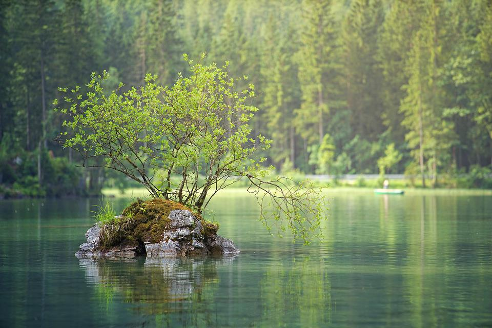 Waters, Nature, Lake, River, Water, Landscape, Forest