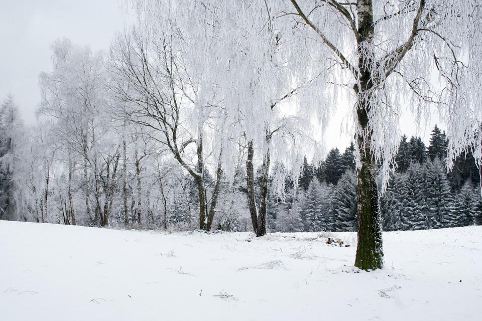 Winter, Forest, Snow, Tree, White, Nature, Landscape
