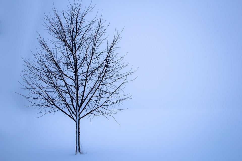 Tree, Snow, Winter, Landscape, Loneliness, White