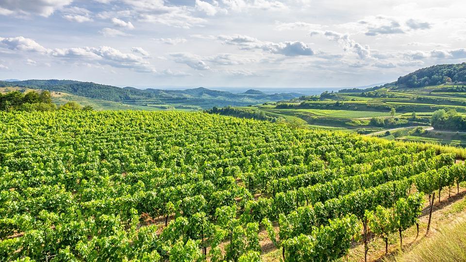 Germany, Wine, Kaiserstuhl, Landscape, Vineyard, Aerial
