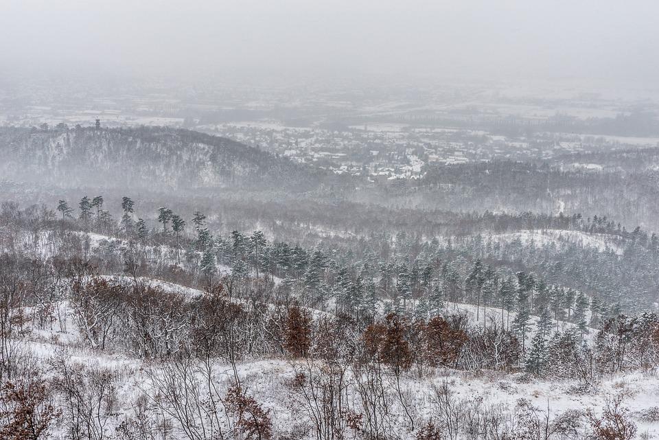 Winter, Cold, Fog, Snowy, Snow, Ice, Landscape, Nature