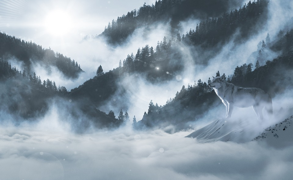 Free photo landscape wolf atmosphere snow wolves